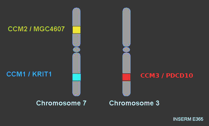 gene_cavernomes
